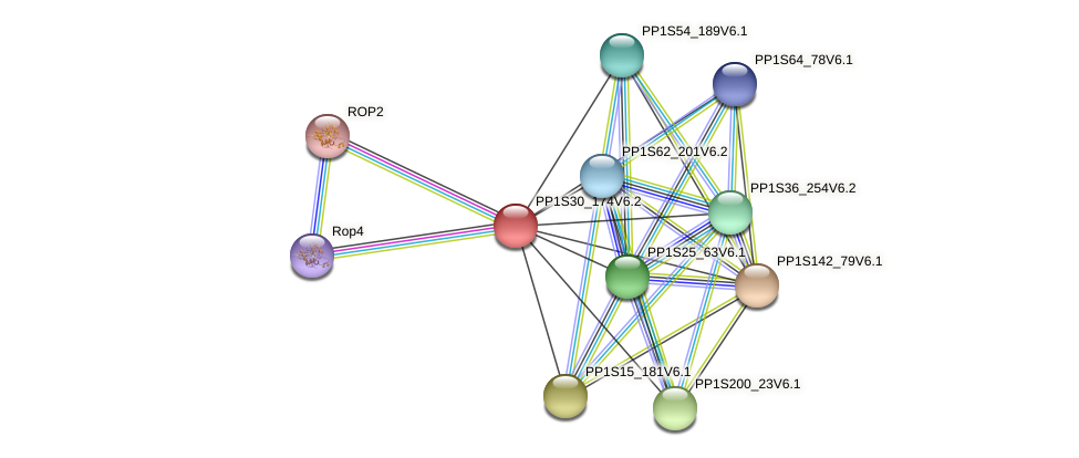 PP1S30_174V6.2 protein (Physcomitrella patens) - STRING interaction network