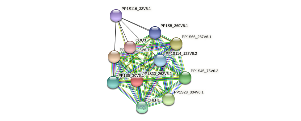 PP1S30_262V6.1 protein (Physcomitrella patens) - STRING interaction network