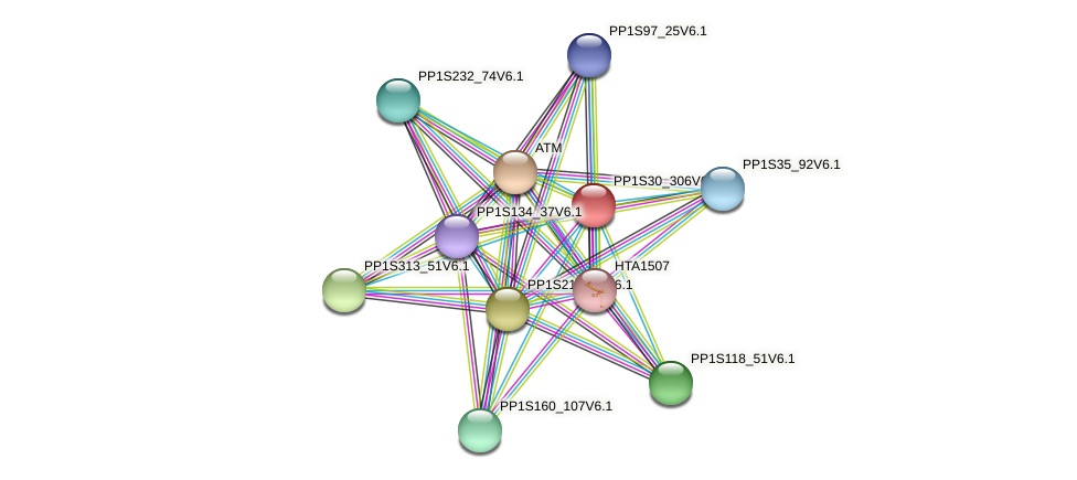 PP1S30_306V6.1 protein (Physcomitrella patens) - STRING interaction network