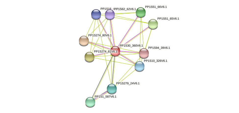 PP1S30_360V6.1 protein (Physcomitrella patens) - STRING interaction network