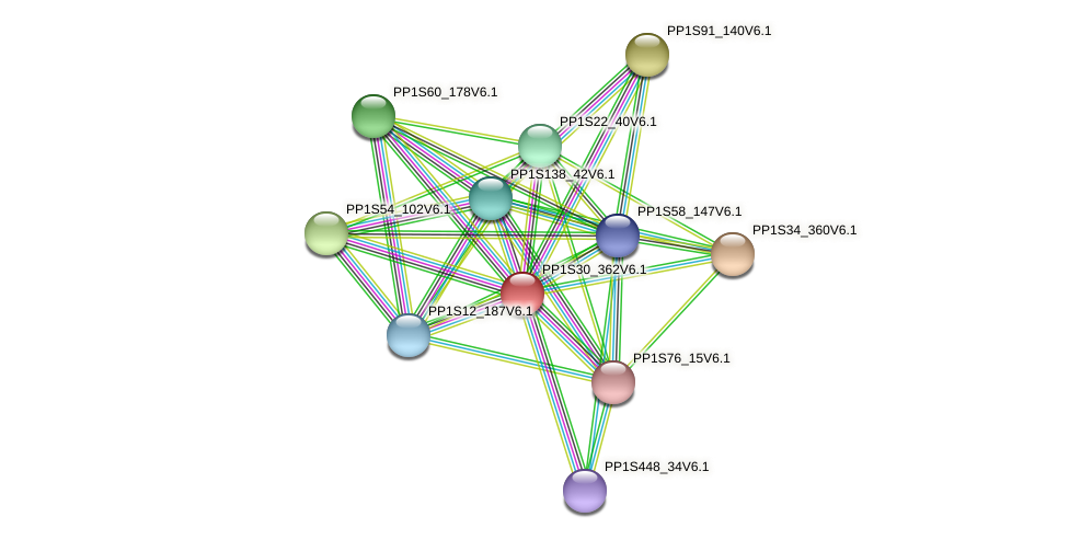 PP1S30_362V6.1 protein (Physcomitrella patens) - STRING interaction network