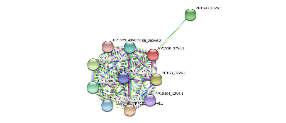 PP1S30_37V6.1 protein (Physcomitrella patens) - STRING interaction network
