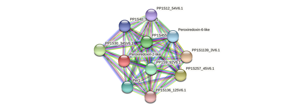 PP1S310_1V6.1 protein (Physcomitrella patens) - STRING interaction network