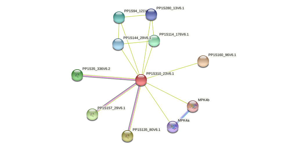 PP1S310_23V6.1 protein (Physcomitrella patens) - STRING interaction network