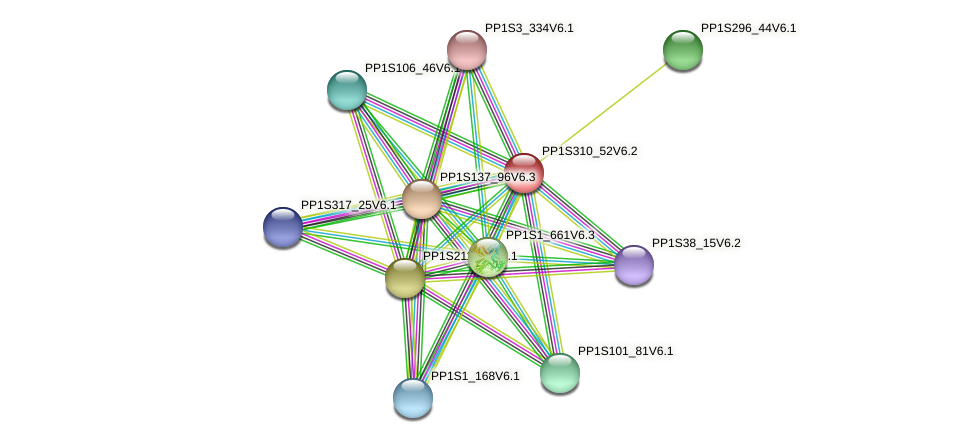 PP1S310_52V6.1 protein (Physcomitrella patens) - STRING interaction network