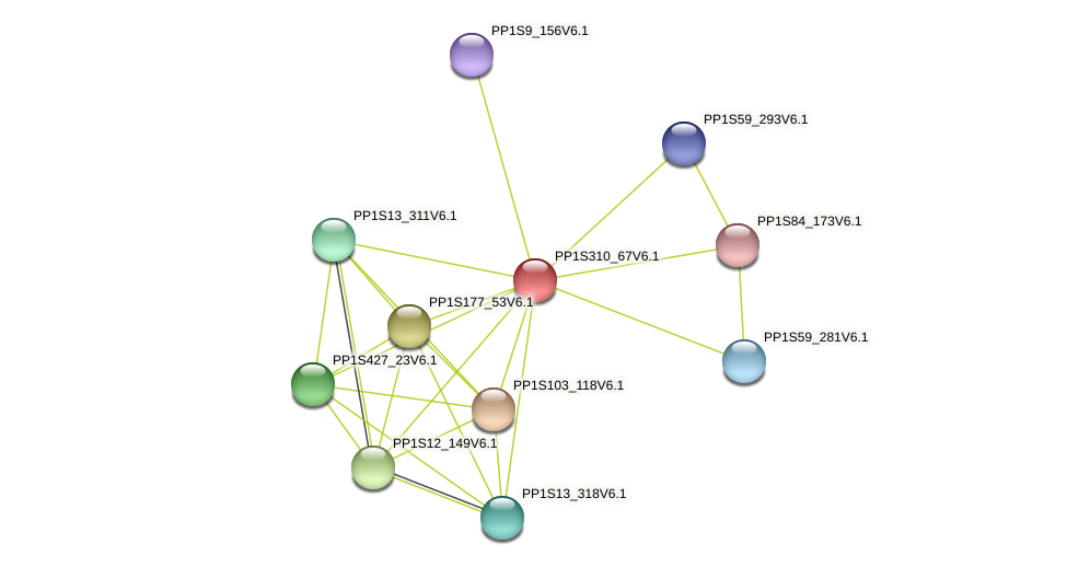 PP1S310_67V6.1 protein (Physcomitrella patens) - STRING interaction network