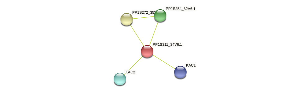 PP1S311_34V6.1 protein (Physcomitrella patens) - STRING interaction network
