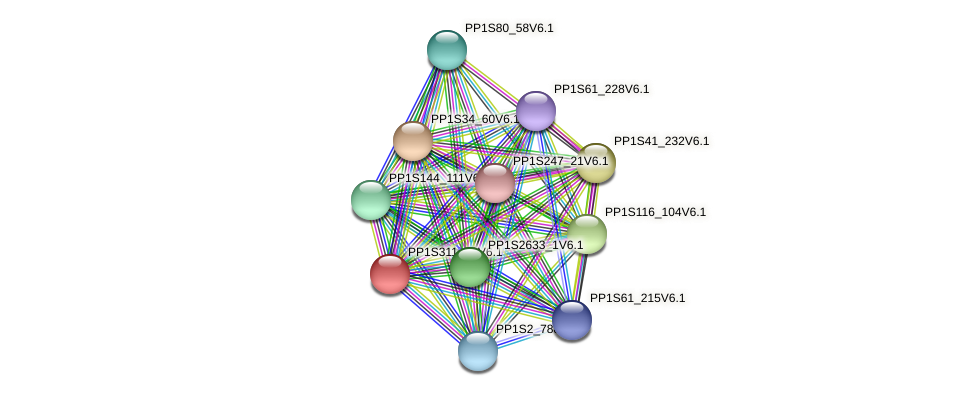 PP1S311_41V6.1 protein (Physcomitrella patens) - STRING interaction network