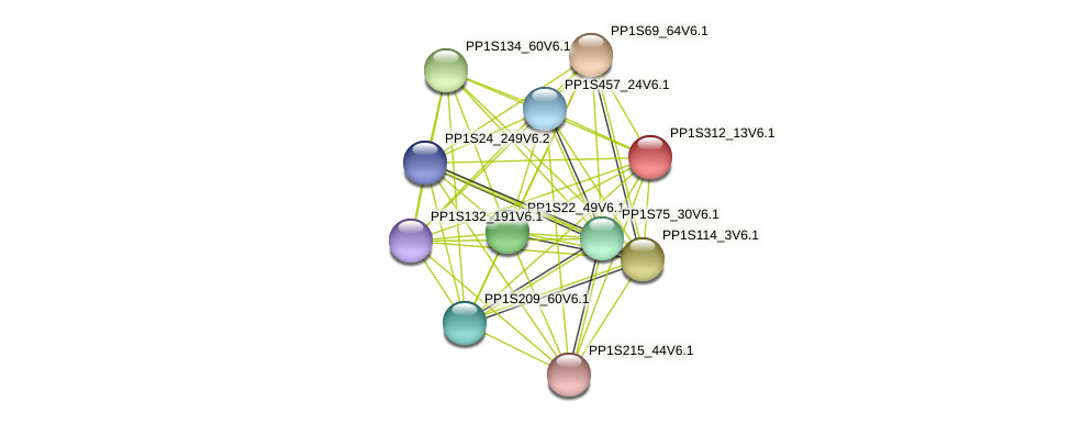 PP1S312_13V6.1 protein (Physcomitrella patens) - STRING interaction network