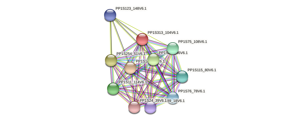 PP1S313_104V6.1 protein (Physcomitrella patens) - STRING interaction network