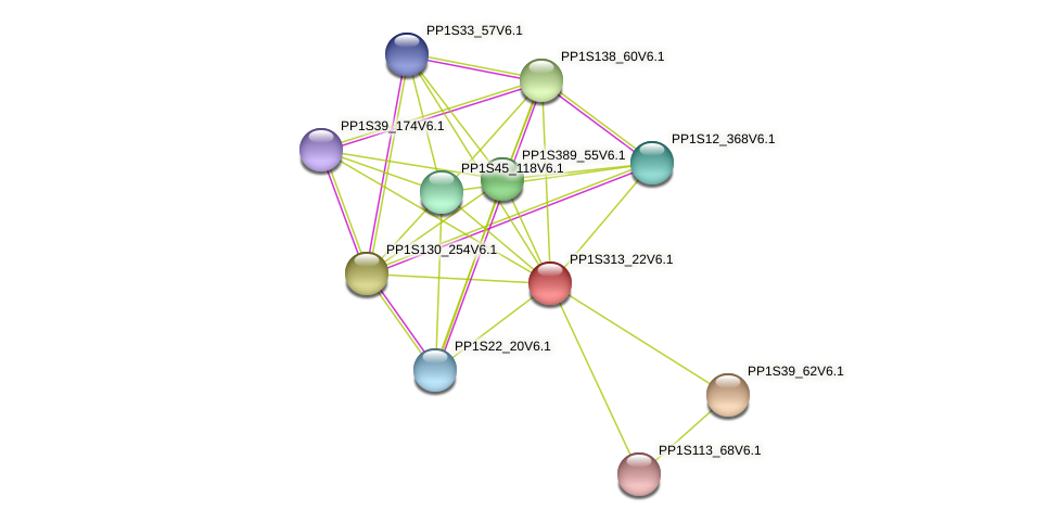 PP1S313_22V6.1 protein (Physcomitrella patens) - STRING interaction network