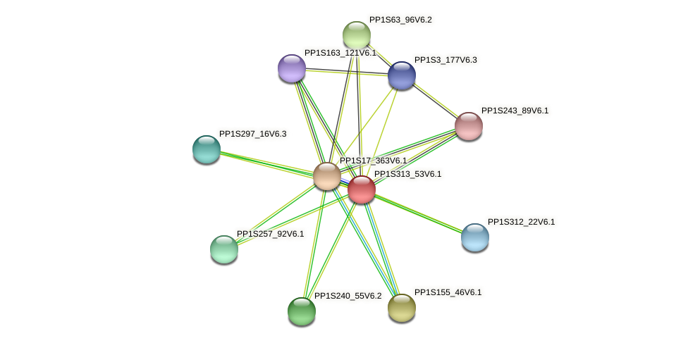PP1S313_53V6.1 protein (Physcomitrella patens) - STRING interaction network