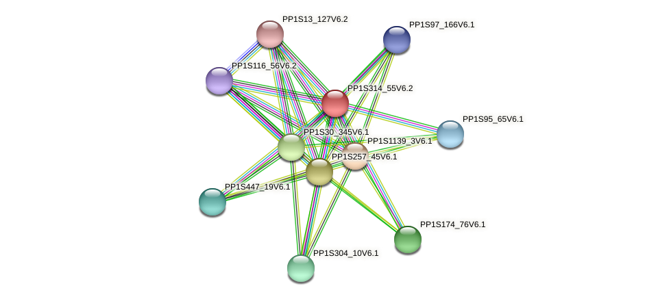 PP1S314_55V6.2 protein (Physcomitrella patens) - STRING interaction network