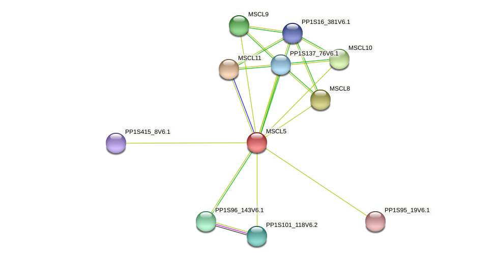 MSCL5 protein (Physcomitrella patens) - STRING interaction network