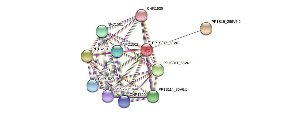 PP1S315_59V6.1 protein (Physcomitrella patens) - STRING interaction network