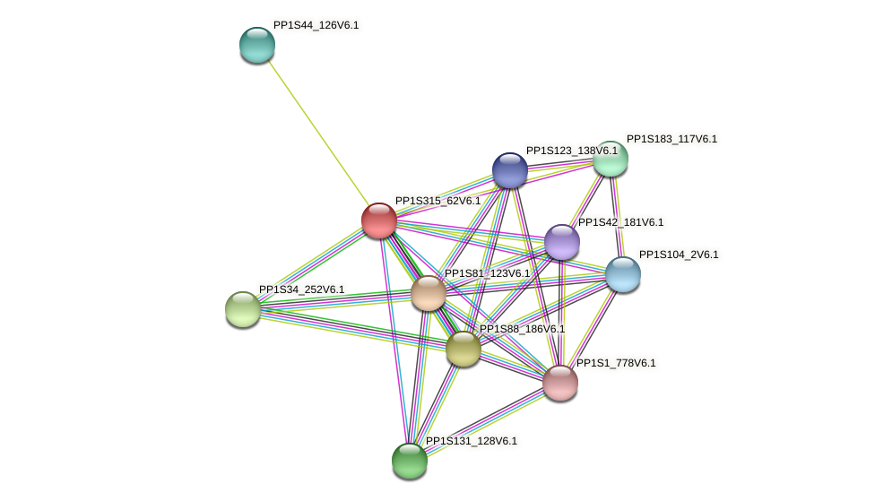 PP1S315_62V6.1 protein (Physcomitrella patens) - STRING interaction network