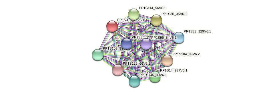 PP1S316_12V6.1 protein (Physcomitrella patens) - STRING interaction network