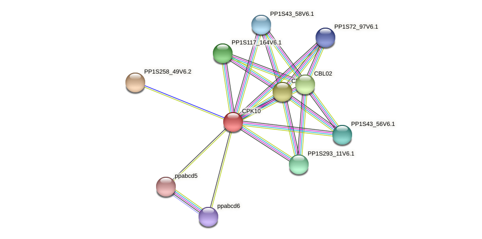 PP1S316_13V6.1 protein (Physcomitrella patens) - STRING interaction network