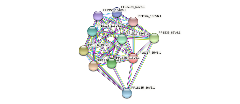 PP1S317_65V6.1 protein (Physcomitrella patens) - STRING interaction network