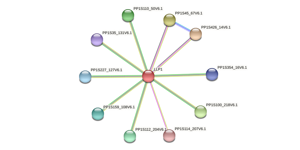 PP1S318_13V6.2 protein (Physcomitrella patens) - STRING interaction network
