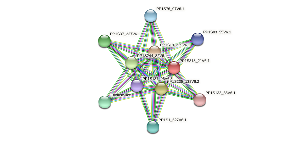 PP1S318_21V6.1 protein (Physcomitrella patens) - STRING interaction network
