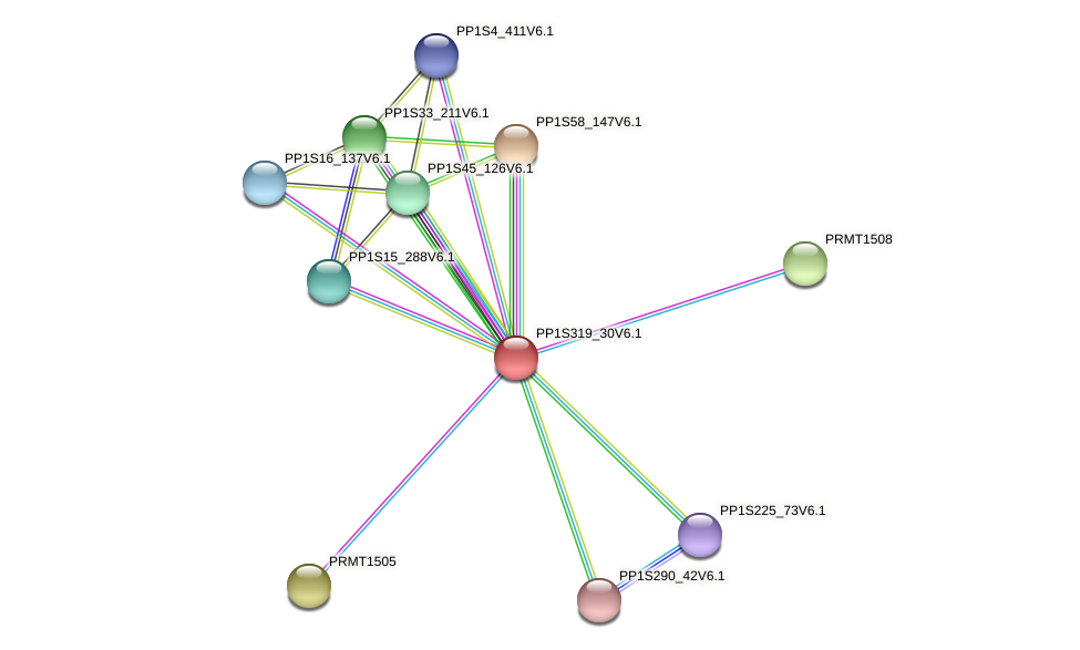 PP1S319_30V6.1 protein (Physcomitrella patens) - STRING interaction network