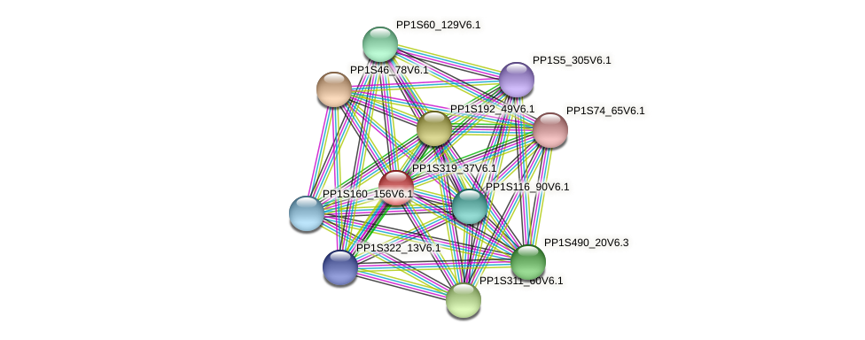PP1S319_37V6.1 protein (Physcomitrella patens) - STRING interaction network
