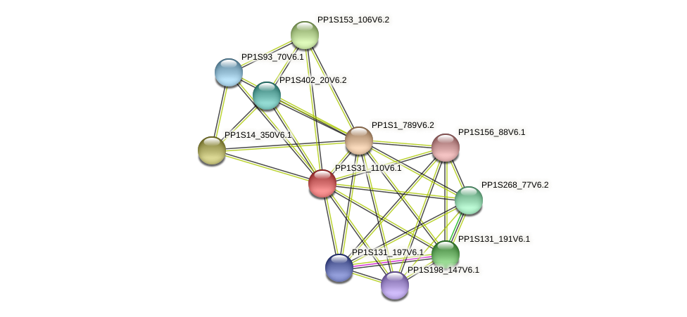 PP1S31_110V6.1 protein (Physcomitrella patens) - STRING interaction network