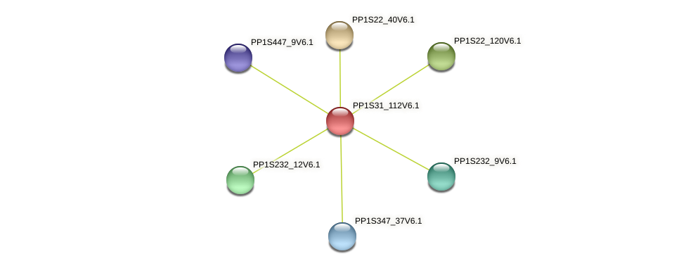 PP1S31_112V6.1 protein (Physcomitrella patens) - STRING interaction network