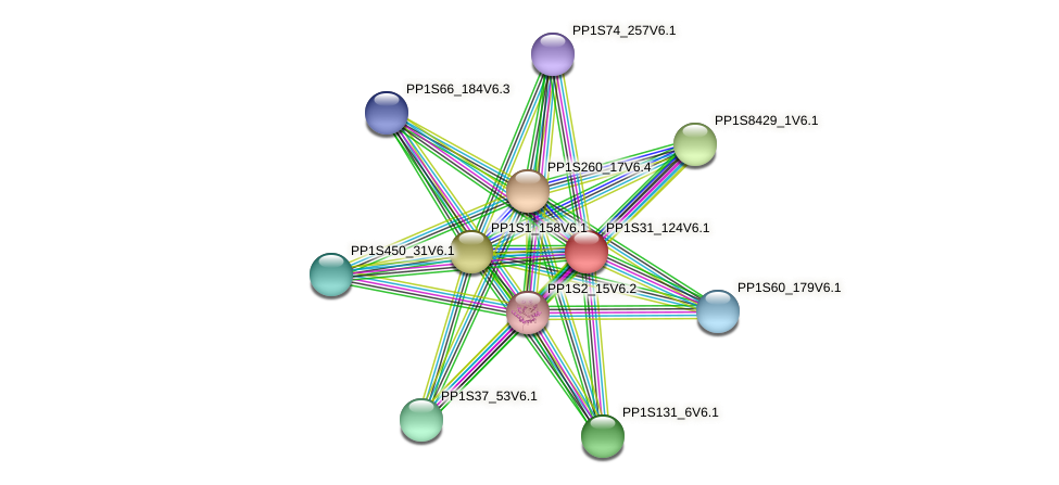 PP1S31_124V6.1 protein (Physcomitrella patens) - STRING interaction network