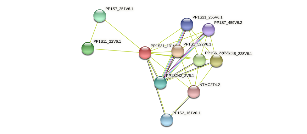 PP1S31_131V6.1 protein (Physcomitrella patens) - STRING interaction network