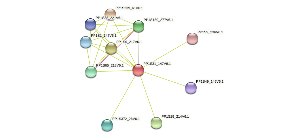 PP1S31_147V6.1 protein (Physcomitrella patens) - STRING interaction network