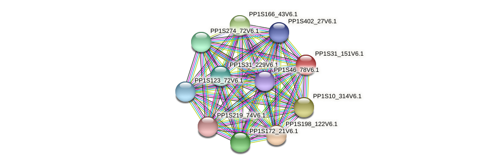 PP1S31_151V6.1 protein (Physcomitrella patens) - STRING interaction network