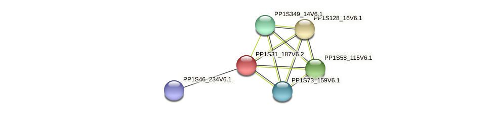 PP1S31_187V6.2 protein (Physcomitrella patens) - STRING interaction network
