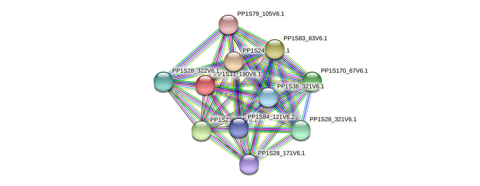 PP1S31_190V6.1 protein (Physcomitrella patens) - STRING interaction network