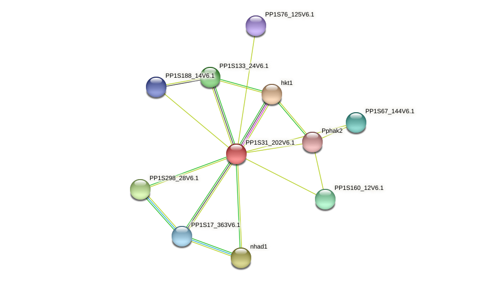 PP1S31_202V6.1 protein (Physcomitrella patens) - STRING interaction network