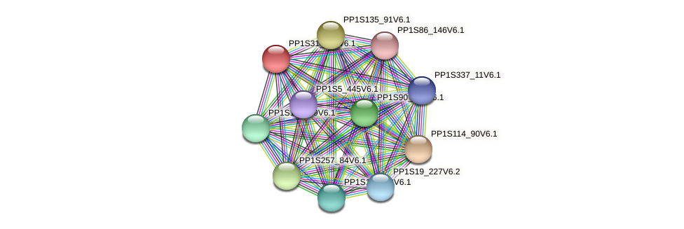 PP1S31_215V6.1 protein (Physcomitrella patens) - STRING interaction network