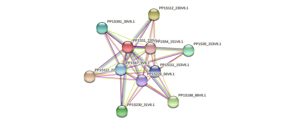 PP1S31_220V6.1 protein (Physcomitrella patens) - STRING interaction network