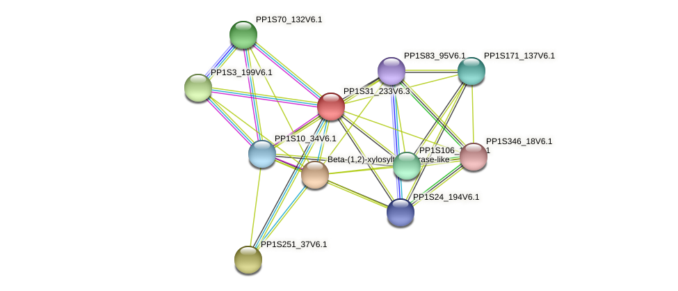 PP1S31_233V6.1 protein (Physcomitrella patens) - STRING interaction network