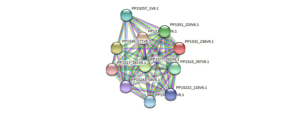 PP1S31_236V6.1 protein (Physcomitrella patens) - STRING interaction network