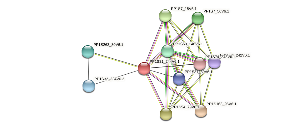 PP1S31_244V6.1 protein (Physcomitrella patens) - STRING interaction network