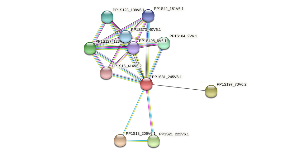 PP1S31_245V6.1 protein (Physcomitrella patens) - STRING interaction network