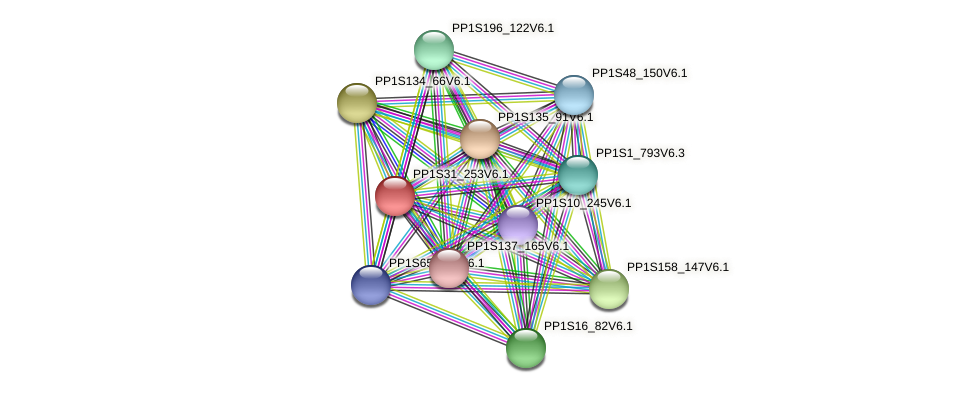 PP1S31_253V6.1 protein (Physcomitrella patens) - STRING interaction network