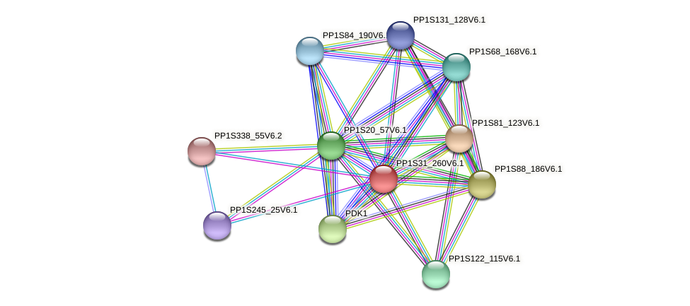 PP1S31_260V6.1 protein (Physcomitrella patens) - STRING interaction network
