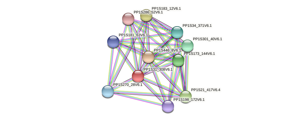 PP1S31_308V6.1 protein (Physcomitrella patens) - STRING interaction network