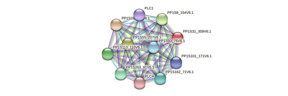 PP1S31_309V6.1 protein (Physcomitrella patens) - STRING interaction network