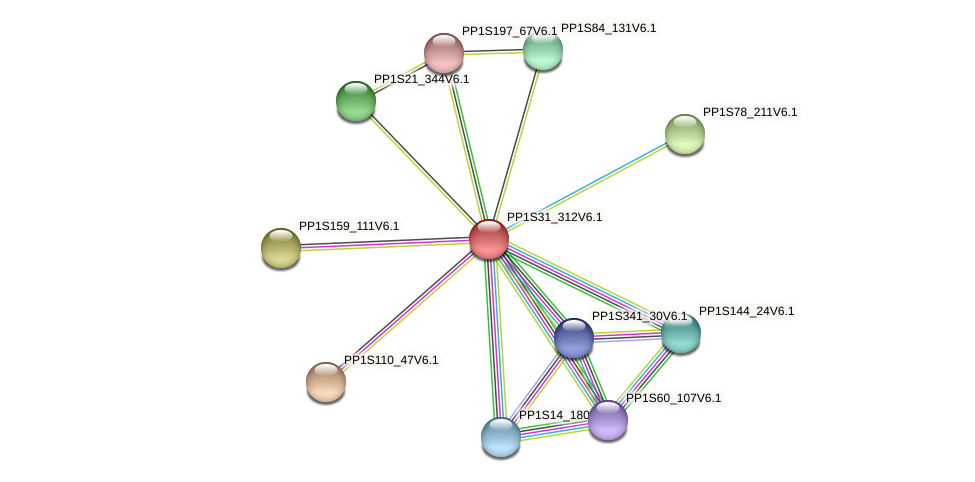 PP1S31_312V6.1 protein (Physcomitrella patens) - STRING interaction network