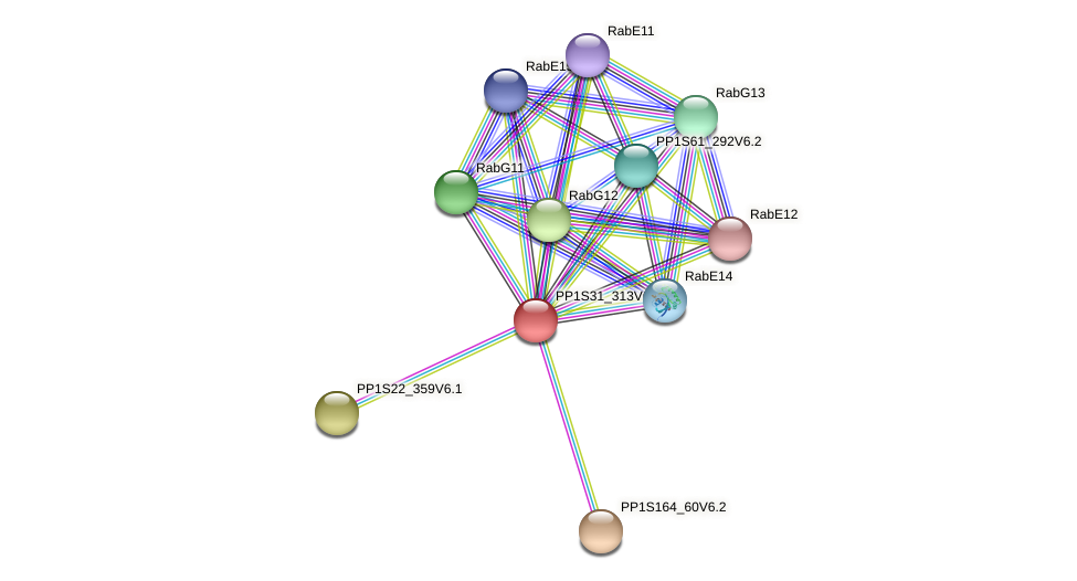 PP1S31_313V6.1 protein (Physcomitrella patens) - STRING interaction network
