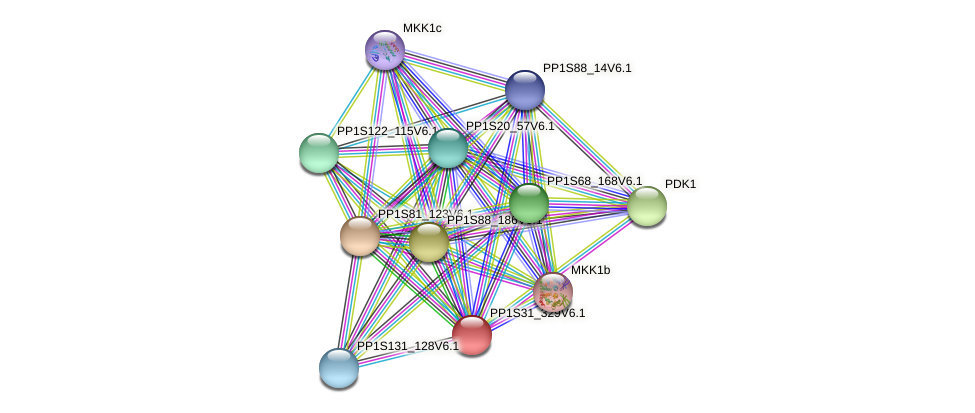 PP1S31_329V6.1 protein (Physcomitrella patens) - STRING interaction network