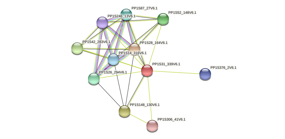 PP1S31_339V6.1 protein (Physcomitrella patens) - STRING interaction network